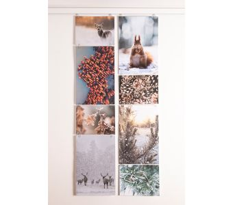 STAS picture hits - transparent clips for hanging pictures